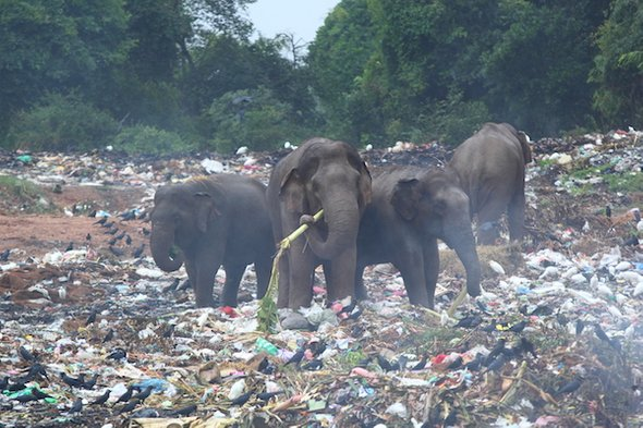 Elephants and plastic waste; single-use plastics are a big problem